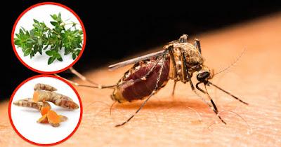 https://1.bp.blogspot.com/-7ArBSUWBPD4/W1mhJcRvqpI/AAAAAAAA-gw/vJXooanyN6ApNGxWv0uy9qDHu5lFmchKgCLcBGAs/s400/natural-mosquito-repellents.jpg