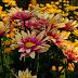 Berwisata Ke Kebun Bunga Pak Yoto Menjadi Salah Satu Alternatif Wisata Edukasi