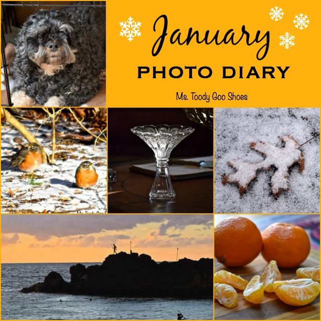 My Photo Diary: January 2015 - Ms. Toody Goo Shoes