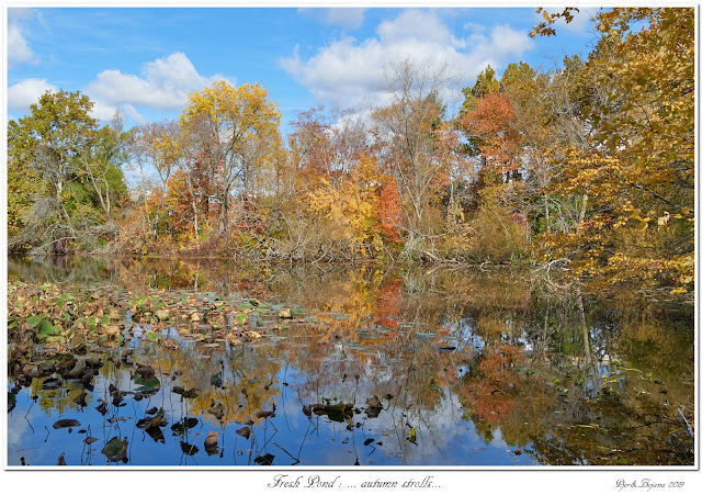 Fresh Pond: ... autumn strolls...