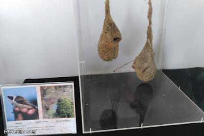 Parte de la exposición de nidos