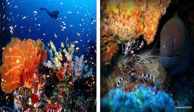 Indonesia juga memiliki pulau kecil di utara Pulau Sumatera yang masih belum diketahui ol PULAU WEH - SURGANYA PARA PECINTA SELAM
