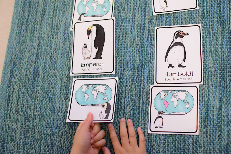 Types of Penguins 3 Part Cards with Habitat Map