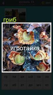 растут грибы в лесу 23 уровень 667 слов