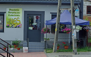 http://fotobabij.blogspot.com/2016/05/frampol-kwiaciarnia-ines-zdjecie-4k-hd.html