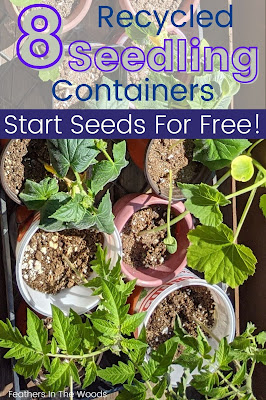 Plastic seed staring containers with plants growing in them