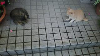 玄関前で見つめあう猫たち