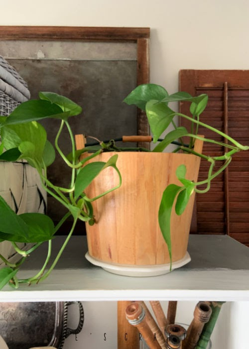 Wooden bucket from the thrift store holding a house plant.