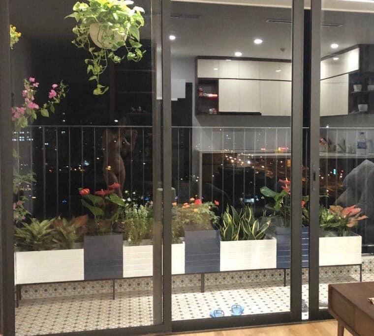 E ở trung cư mới trồng dàn hoa ngoài ban công cho mát mẻ , ae thấy dàn hoa e trồng có ok ko ???