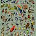 Posters Aves do Brasil