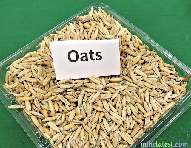Oats feature a protein termed avenin, which may result in an allergic response in many people.
