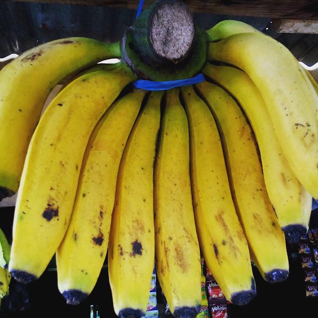 pisang curup produk unggulan bengkulu