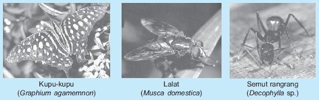 Pengertian, Ciri-ciri dan Macam-macam Klasifikasi Arthopoda beserta Contohnya