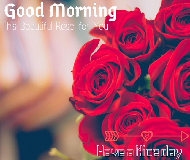 red rose  Good Morning  Images
