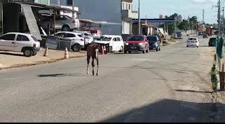 Em Guarabira PB, animais soltos nas ruas colocam em risco motoristas, pedestres e motoristas