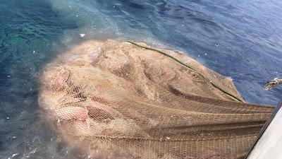 IMG 20200904 WA0013 - Como todos los años los arrastreros de Santa Pola cogiendo atunes en descomposición