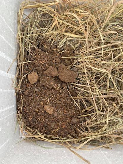 Tiến hành đồ đất trồng hay giá thể vào thùng