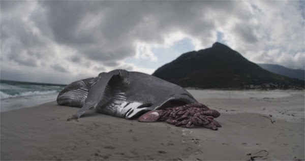 getStunned: Megalodon - Largest Shark that ever lived