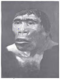 Manusia purba yang diperkirakan hidup pada masa pra aksara