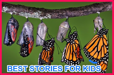 {BEST SHORT STORY} BUTTERFLY AND COCOON | BEDTIME STORIES