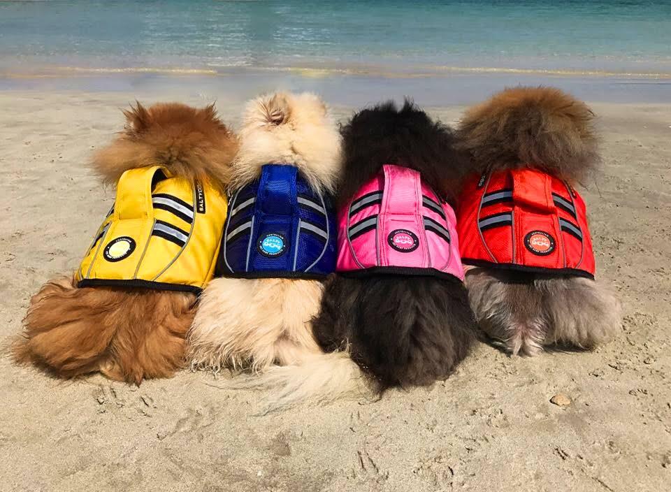 18 Best Summer Dog Accessories For 2018 Australian Dog Lover
