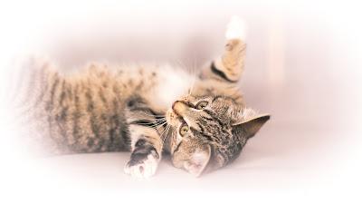 Cat, Katzenkitten, Tierfotografie von Fotograf Michael Schalansky