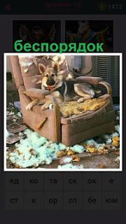 655 слов собака в кресле и вокруг беспорядок 10 уровень