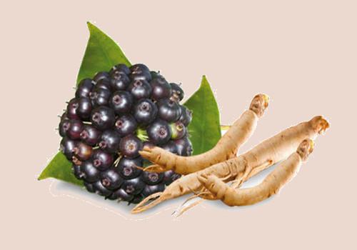 Siberian Ginseng reducing cholesterol levels