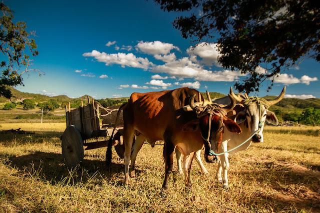 Turismo Rural. Carro de Boi (Foto: Dmitri de Igatu)
