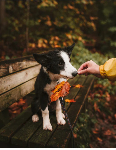Advice to choose the correct puppy breed
