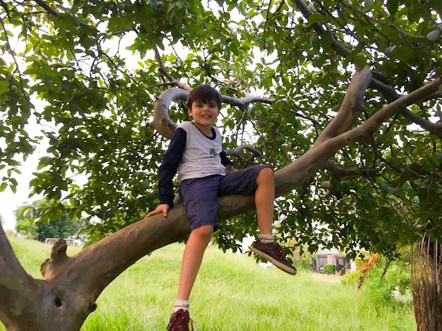 Foto do meu filho em cima da árvore, pegando goiaba.