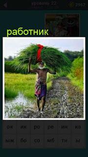 по дороге идет мужчина работник и на голове несет охапку большой травы