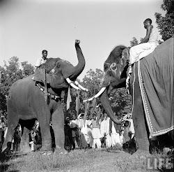 Elephants in Sonepur Cattle Fair