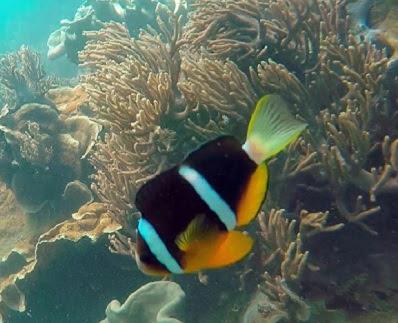Hệ sinh vật biển Cù lao Chàm