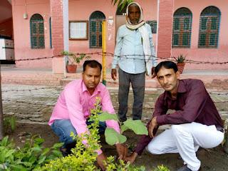 धरती को बचाना है तो ज्यादा से ज्यादा पेड़ो को लगाना है-विनोद कुमार सिंह | #NayaSaberaNetwork