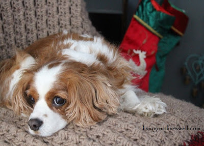 Avalie, Our Cavalier King Charles Spaniel