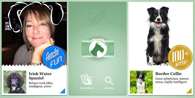 Microsoft's New App 'Fetch' Can Detect Dog Breeds