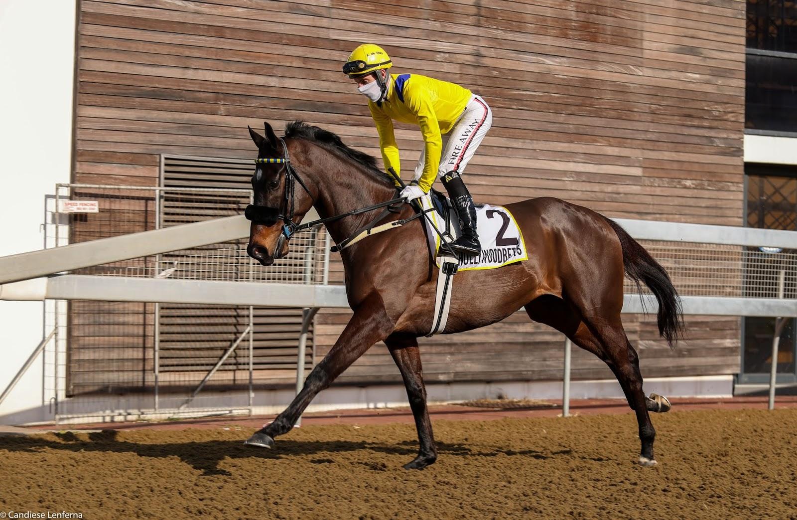 Vodacom Durban July 2020 Horse Profile - Vardy
