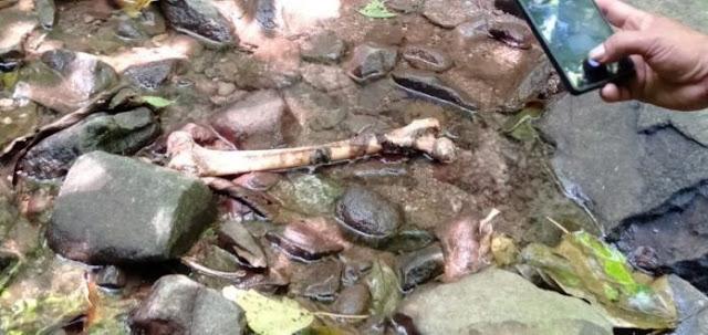 Tulang Belulang Dan Tengkorak Manusia Ditemukan Berceceran Di Tengah Hutan