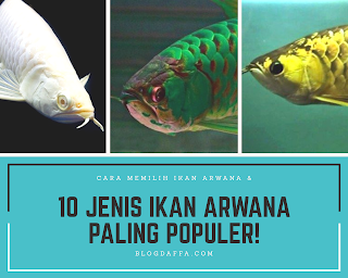 Jenis jenis ikan arwana yang paling populer