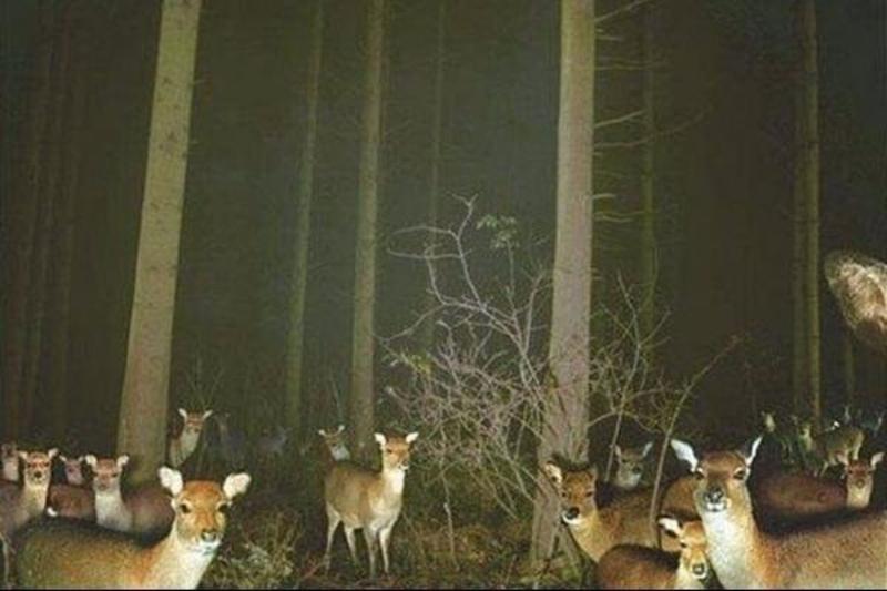 Counting-Deer