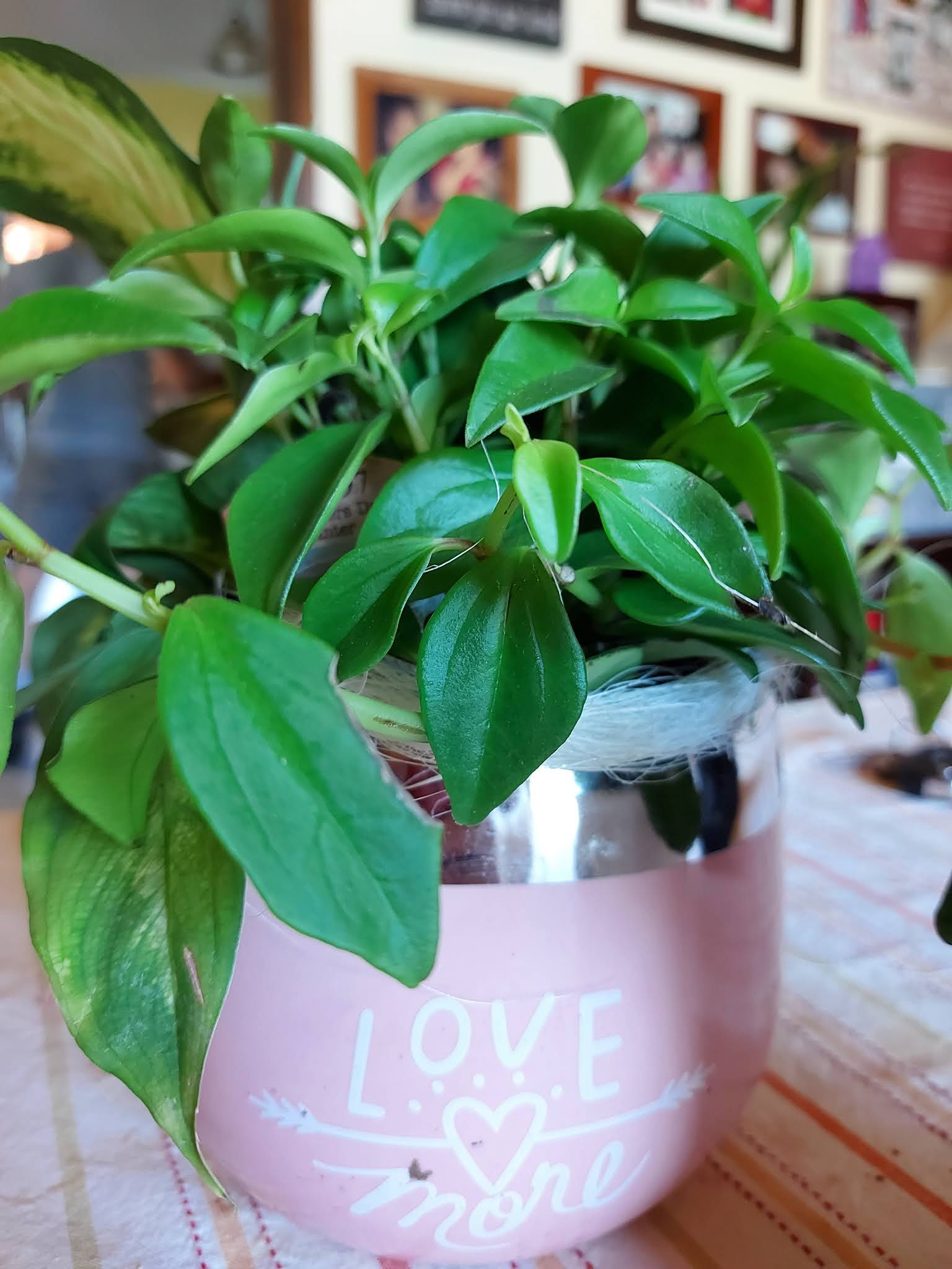 However, there's something that I love too that I can take care of— the house plants.  Happy Mother's Day!