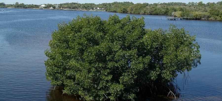 Caloosahatchee River