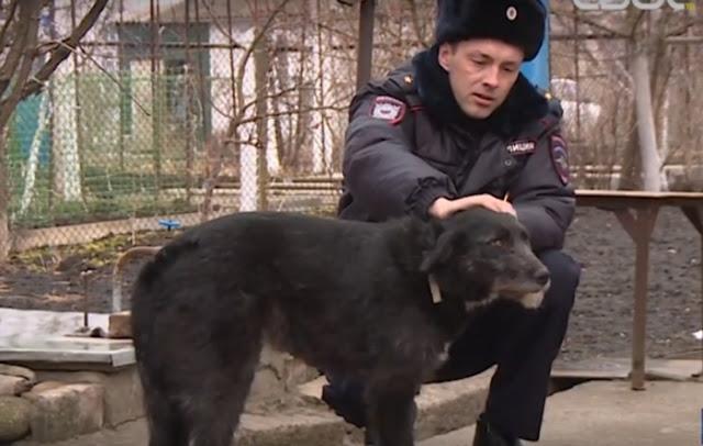 Охотник расстрелял бездомную собаку. Спасли животное и собрали деньги на лечение полицейские