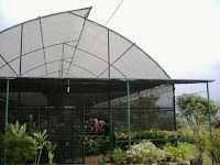 Pembuatan Greenhouse dari Kombinasi Paranet dengan Bambu