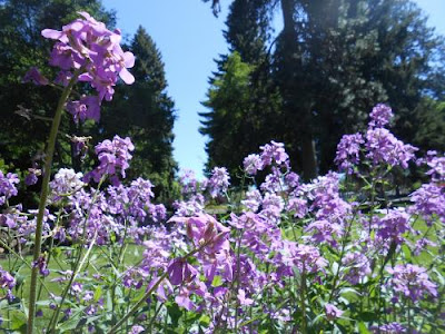 spring, flowers,