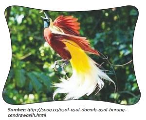 Asal Usul Burung Cenderawasih www.simplenews.me