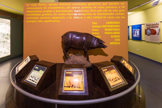Interior del Museo del jamón de Aracena