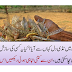 Where did the locusts come from in Pakistan? Is it someone's conspiracy?