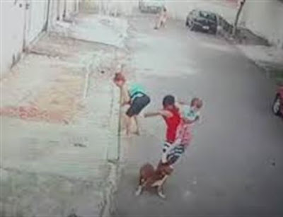 imagem-ataque-pitbull-rio